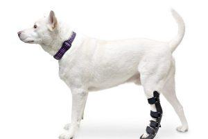 Tutori per cani zampe posteriori: tipi, differenze e prezzi
