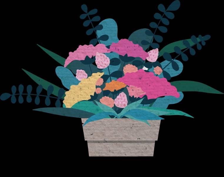 Coltivare autofiorenti outdoor in vaso, ecco tutto quello che c'è da sapere
