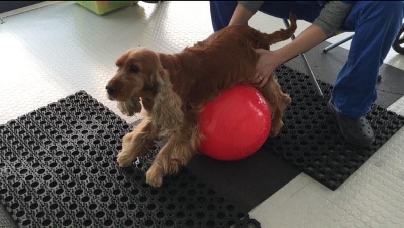 Fisioterapia per il cane: quando serve?